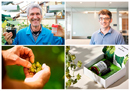 Three Plant & Food Research finalists in 2018 KiwiNet Awards