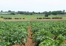New nutrient management guidelines for vegetables