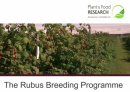 Rubus berry breeding programme