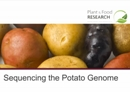Sequencing the Potato Genome